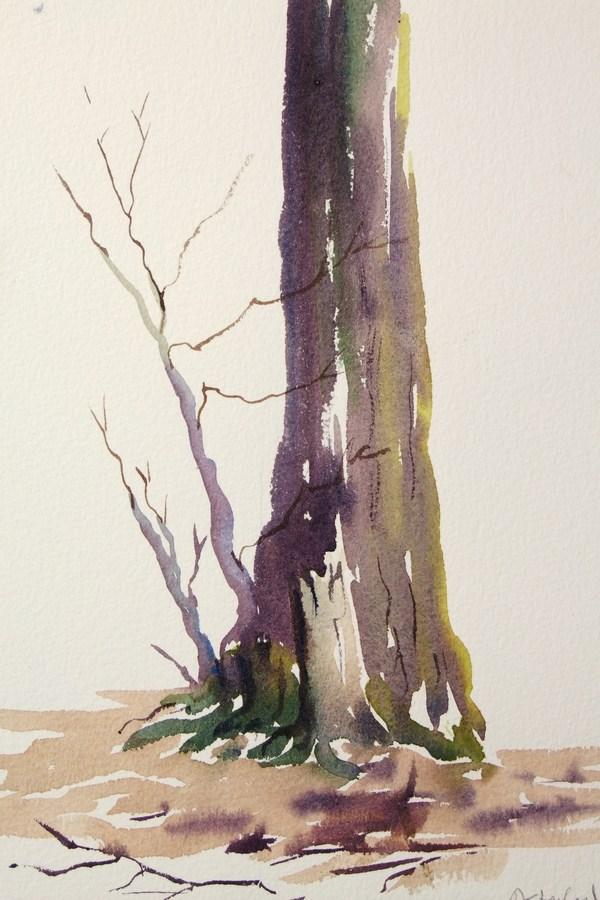 ./newwatercolours/10626Treetrunk in spring, Hertfordshire_wm.JPG