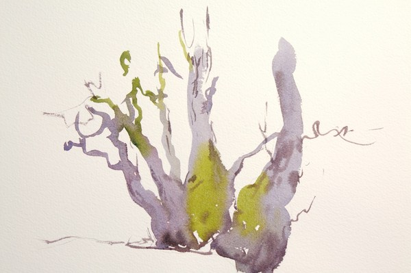 ./newwatercolours/10635Old tree, Holwick Teesdale_wm.JPG